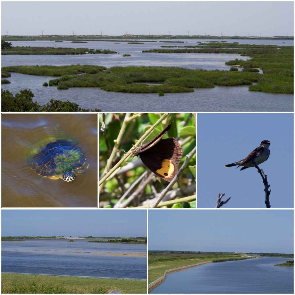 Pea Island Wildlife Refuge - Outer Banks - North Carolina